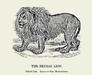 Lion Menagerie