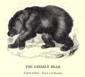 Martin the Grizzly Bear