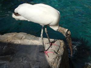 Sea Storks